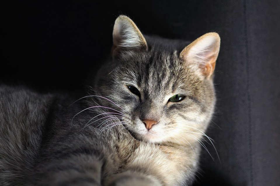 respirear par le coeur chat merveilleusement imparfaite