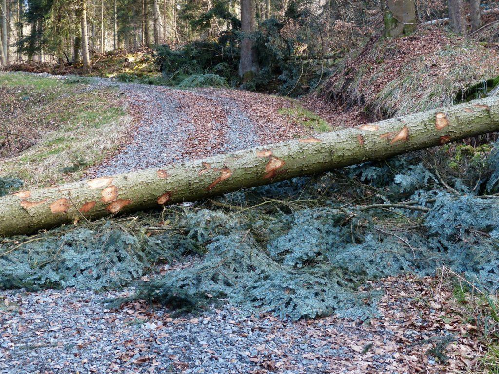 Un arbre est tombé sur la route. Pour expliquer que parfois tout est bloqué, on ne reçoit pas ce que l'on a demandé et c'est le moment de laisser agir notre Être infini